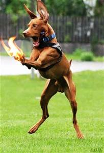 Dog_Paws_On_Fire